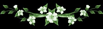 "barre ""fleur blanche"""